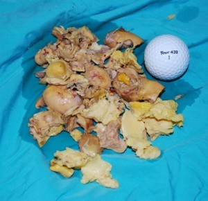 rotting-egg-material-removed-from-hen-300x290